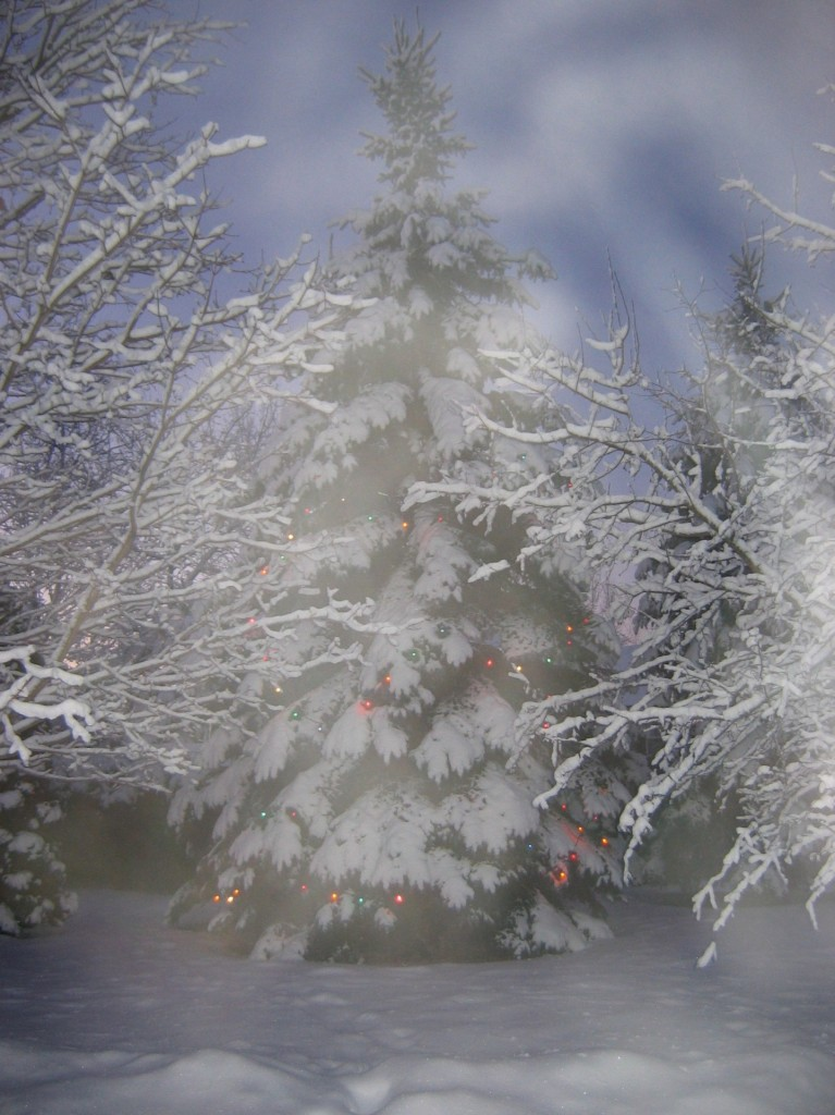 Frosted Christmas Tree at Musselman's Lake. Photo Dan Wigmore