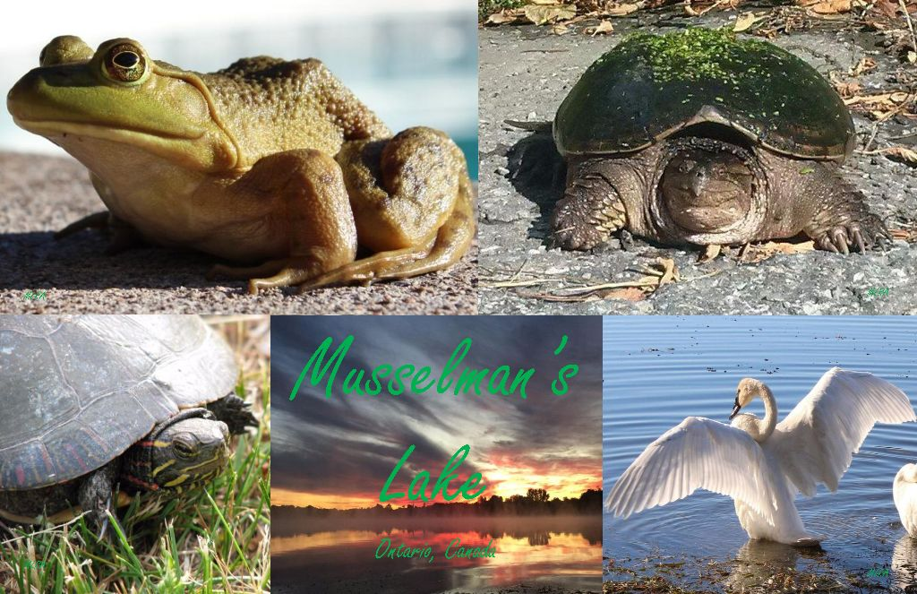Musselman's Lake, Ontario, Canada